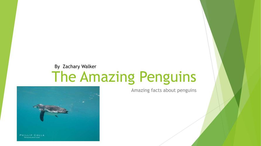 Penguins by Zach