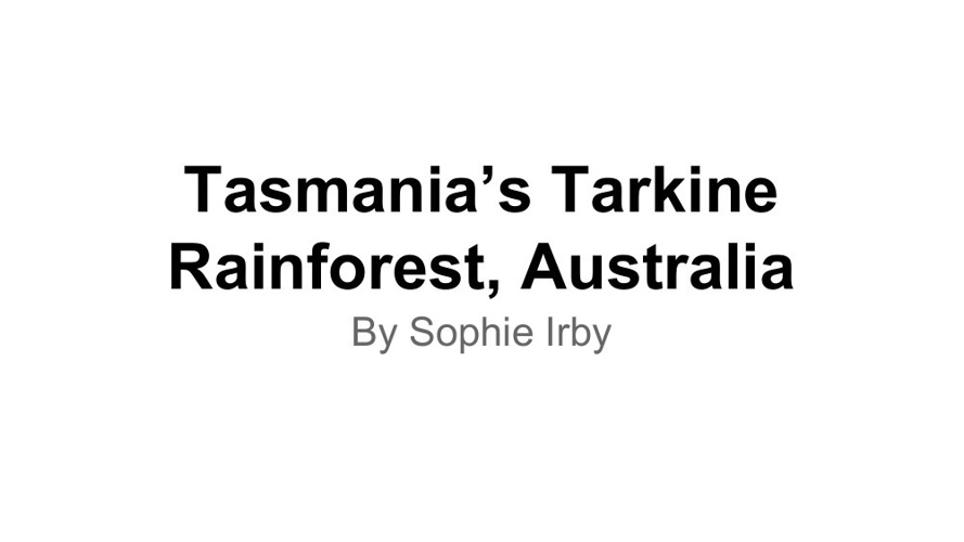 Tarkine Rainforest, Tasmania