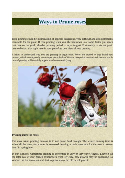 Ways to Prune roses