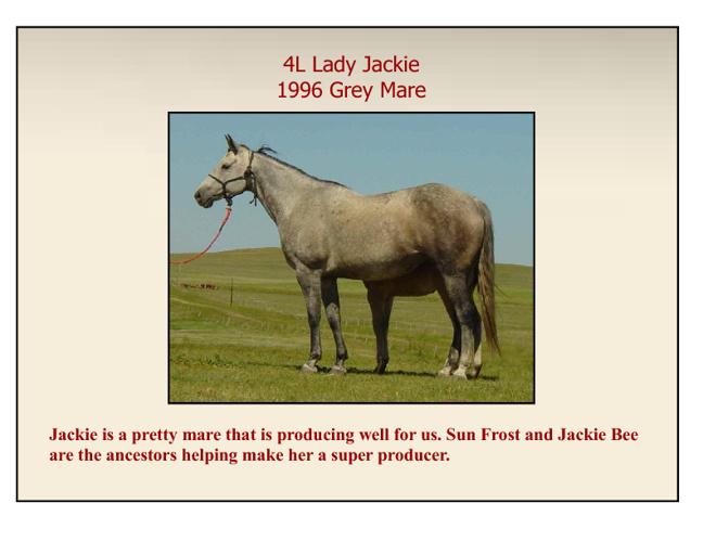 Quarter Horse Foals Archive