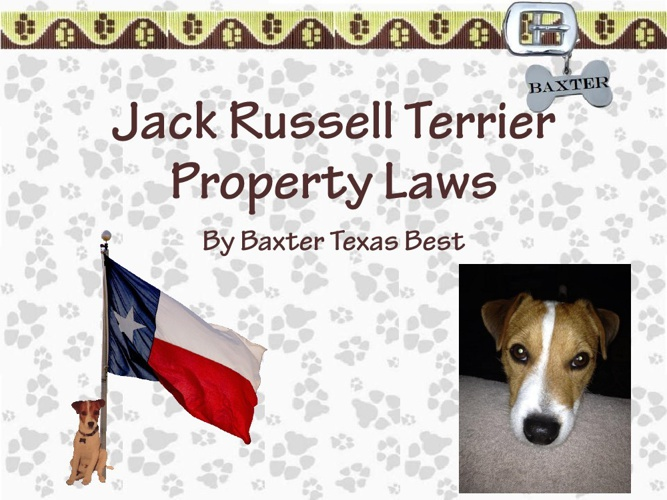Jack Russell Terrier Property Laws