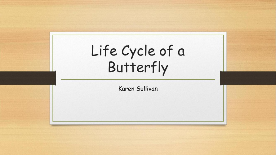 Life Cycle of a Butterfly2