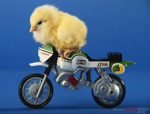 Chick-On-Motocross-Motorcycle