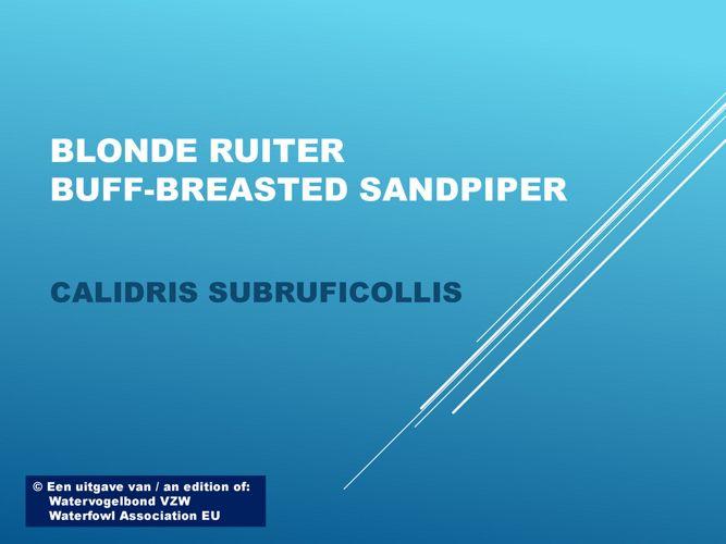 Blonde ruiter - Buff-breasted sandpiper