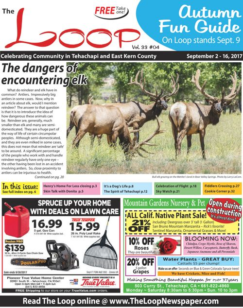 The Loop Newspaper Vol 33 No 04