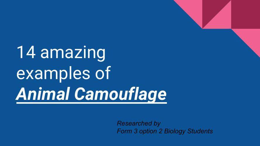 14 amazing examples of  Animal Camouflage
