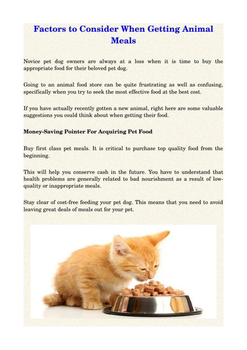 Factors to Consider When Getting Animal Meals