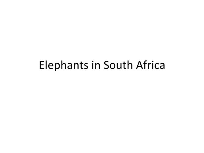 Elephants of South Africa- Mack Prioleau