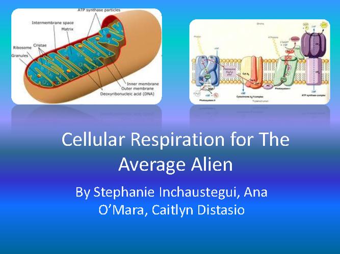 Stephanie, Ana, Caitlin Cellular Respiration