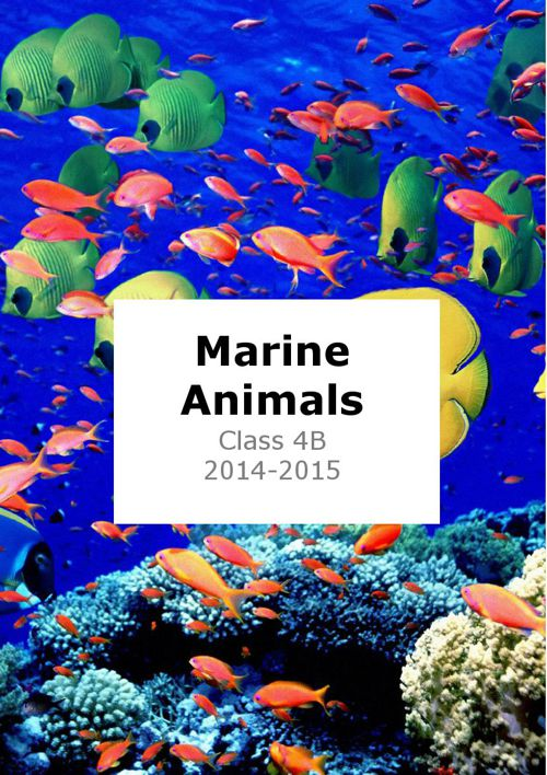 Marine Animals 4B