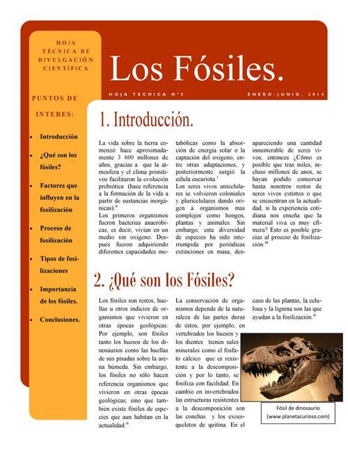 fosiles sin logo