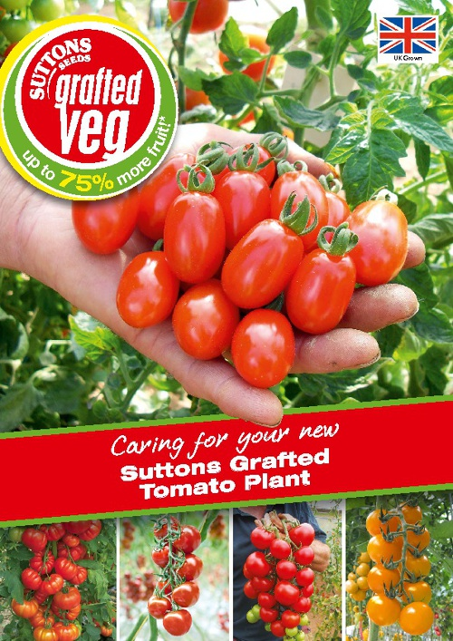Suttons Grafted Tomato Plant Growing Guide