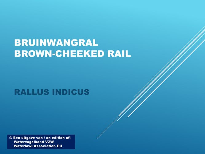 Bruinwangral - Brown-cheeked rail