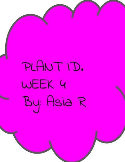 Plant ID.4