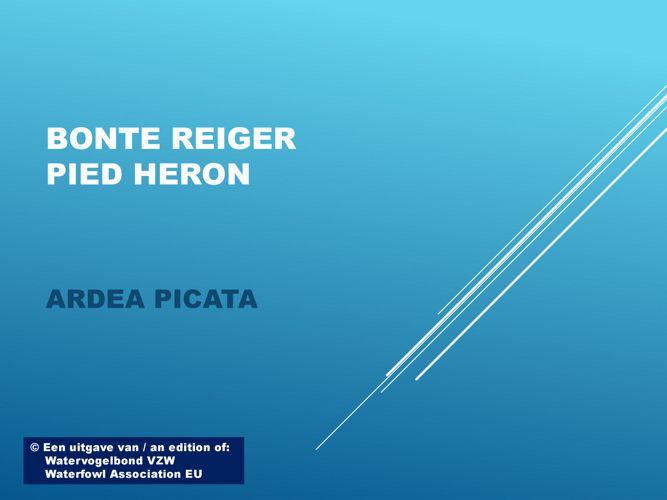 Bonte reiger - Pied heron