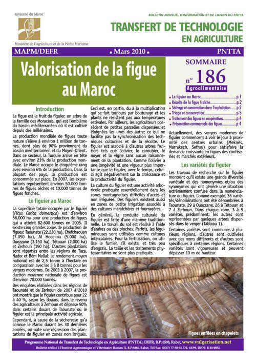 Valorisation de la figue au Maroc_186