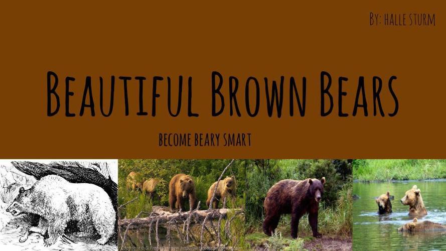Beautiful Brown Bears
