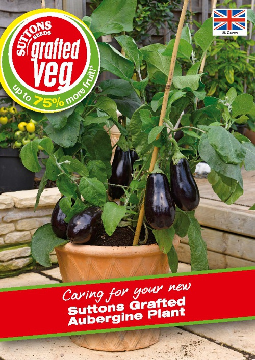 Suttons Grafted Aubergine Growing Guide