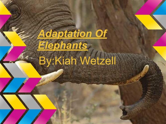 Adaptation Of An Elephant