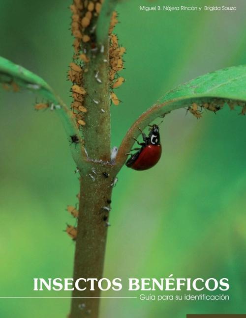 Insectos Beneficos, Saul Alexander Alarcon Gutierrez