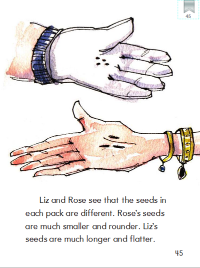 Lesson 27: Seed Sisters