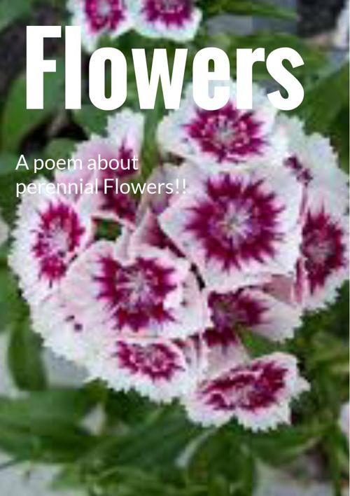 Perennial flowers poem