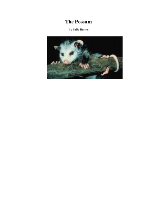 Possums 2