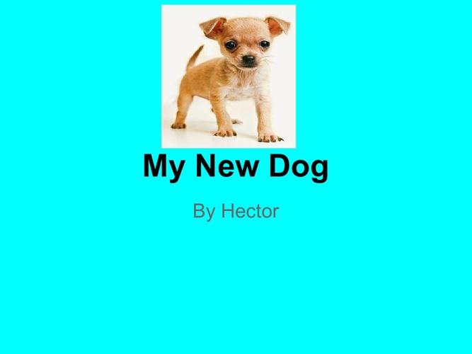 My New Dog