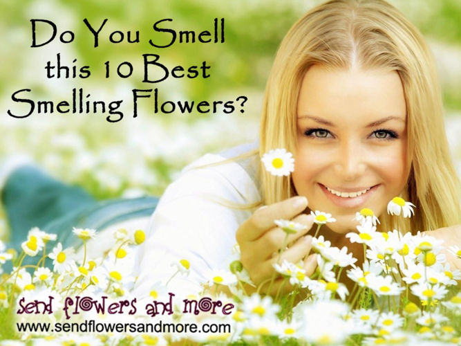 10 Top Smelling Flowers in the World