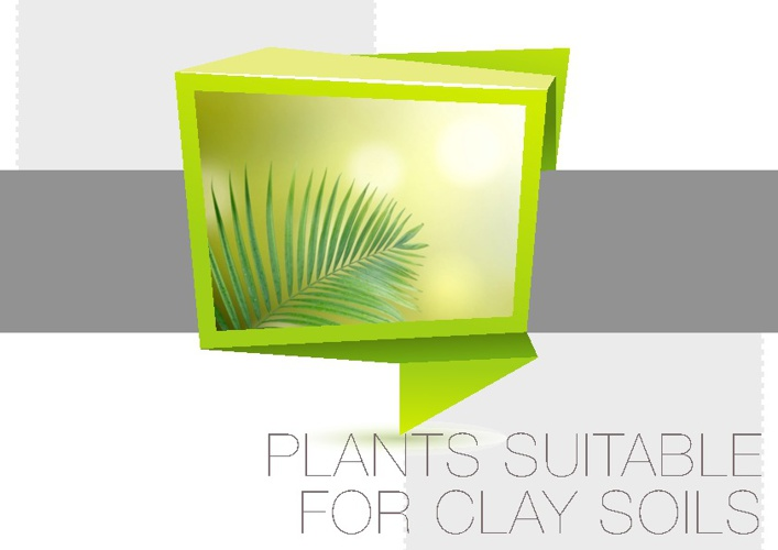 Plants Suitable for Clay Soils