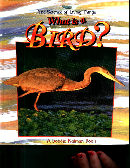 Bird attempt 2