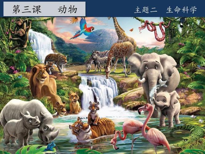 动物的外型特征