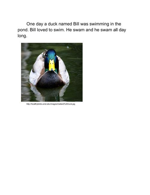 Bill's Pond
