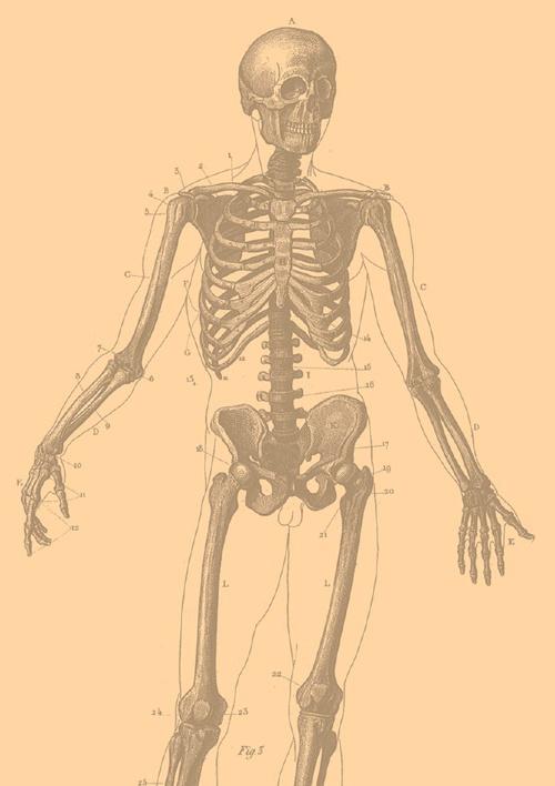 Anatomy worksheet