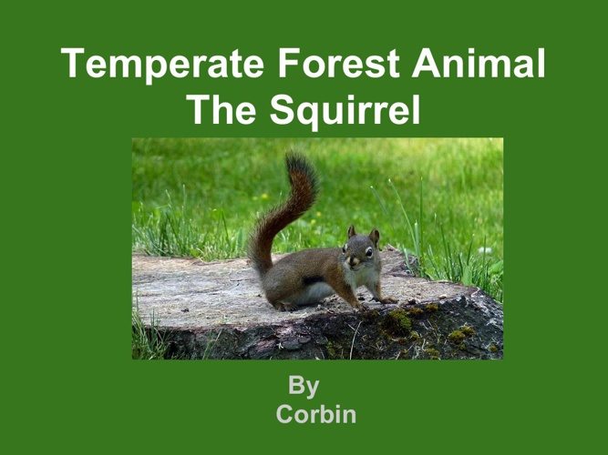 Corbin Squirrel