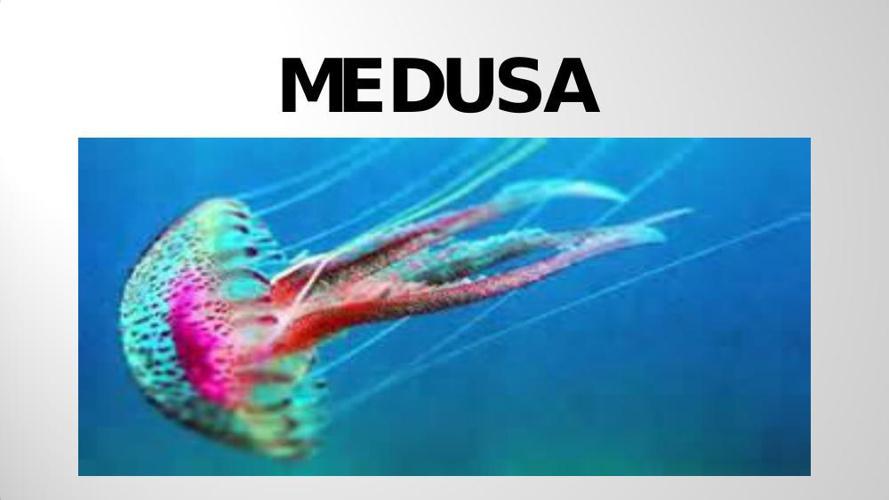 La medusa Claudia Scannavini