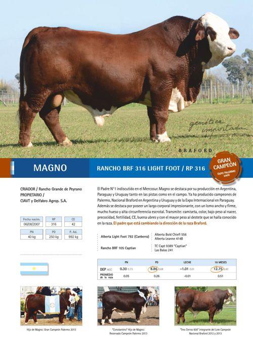 Catálogo FERTIGEN 2015 - raza Braford