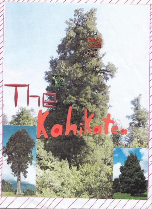 The Kahikatea