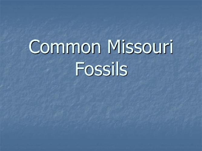 Missouri Fossils