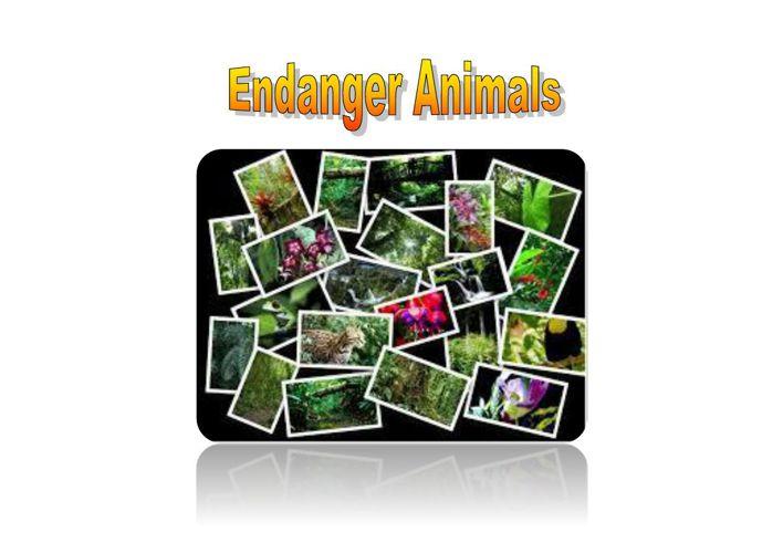 endanger_animals