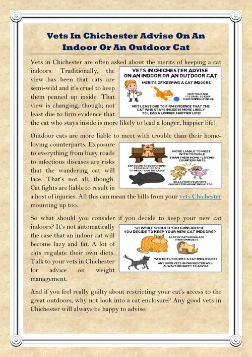 Vets In Chichester Advise On An Indoor Or An Outdoor Cat