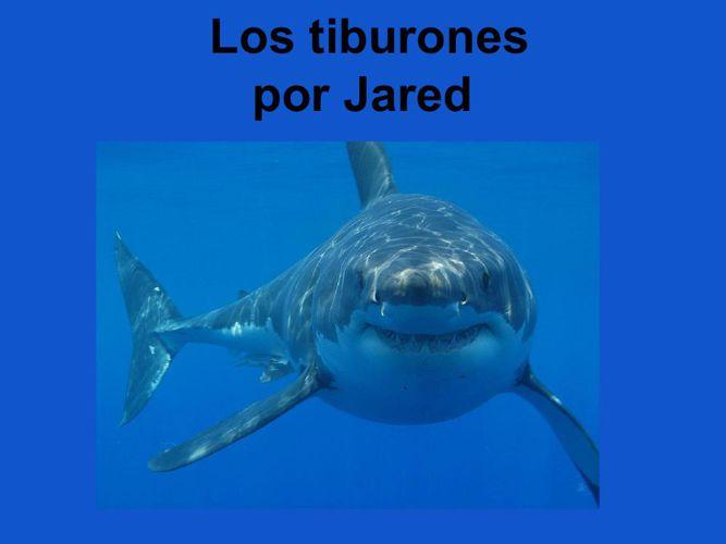 Jared Los tiburones