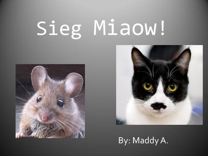Sieg Miaow!