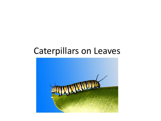 Caterpillars on Leaves