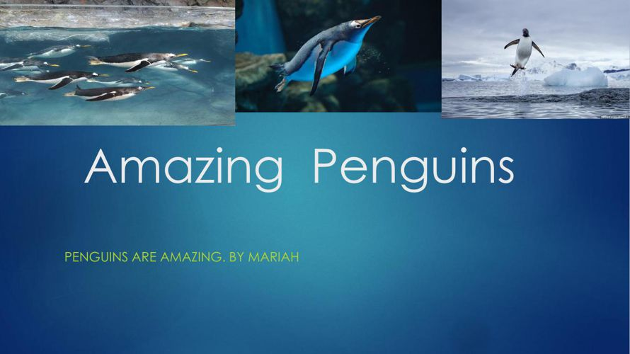 Amazing  penguins By  Mariah