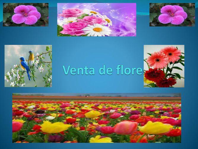 Venta-de-flores-JARA-ROJAS-JESSELA-MERCEDES
