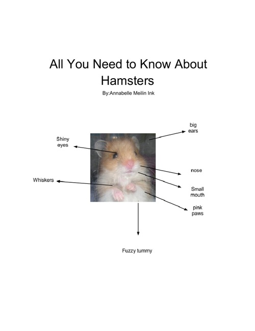 All  you  Need  to  Know  About  Hamsters