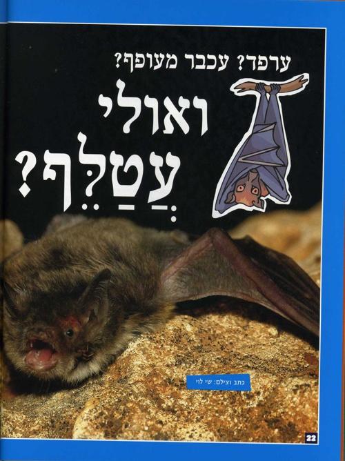 עטלפים: גלילאו צעיר 20, ספטמבר 2005