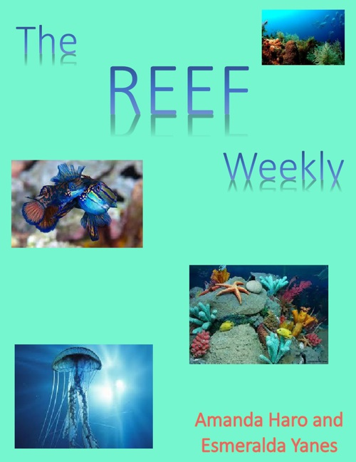 The Reef Weekly