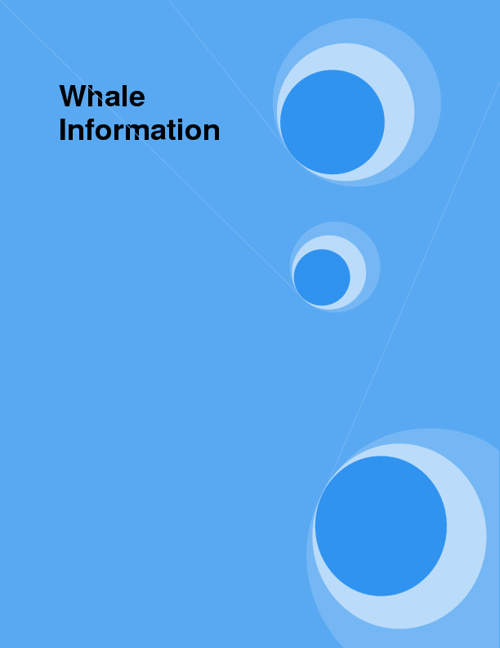 Whale Information